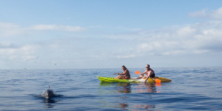 2-hour Kayaking Adventure with Dolphins in Tenerife